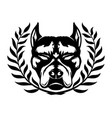 dog breed pit bull terrier vector image