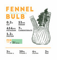 nutrition facts fennel bulb hand draw sketch vector image