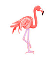 hand drawing pink flamingo tropical bird vector image