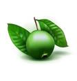 photo realistic alibertia edulis 3d fruit vector image vector image
