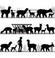 silhouettes of alpacas and its cubs outdoors vector image vector image