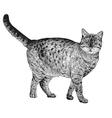 Cat 04 vector image vector image