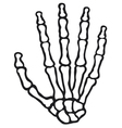 Human skeleton hand vector | Price: 1 Credit (USD $1)
