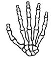 human skeleton hand vector image vector image