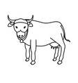 indian sacrew cow cartoon vector image vector image