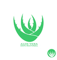Aloe Abstract green plant vector image
