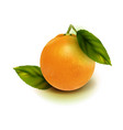 realistic orange fruit isolate orange with vector image