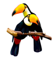 toco toucans sitting on branch vector image