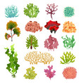 coral and seaweed underwater flora sea water vector image