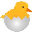 gosling vector image vector image