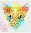 hipster polygonal animal sphynx cat vector image vector image