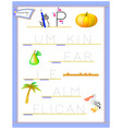 tracing letter p for study english alphabet