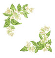 decor element for frame with jasmine branches vector image