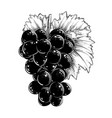 hand drawn sketch of grapes in black isolated vector image