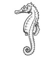 sea horse engraving vector image