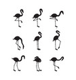 set flamingo black silhouettes in various poses vector image