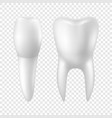 3d realistic render white toothicon set vector image vector image