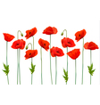 Beautiful nature poppy background vector image vector image
