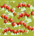 gooseberry seamless pattern vector image vector image