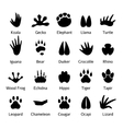 Animal and reptile footprints vector image vector image