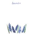 watercolor lavender vector image vector image