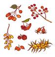 autumn bunch wild berries set september or october vector image vector image