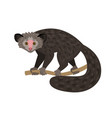cartoon wild monkey vector image vector image