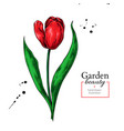 tulip red flower and leaves drawing hand vector image vector image