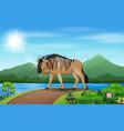 cartoon wildebeest walking along road vector image vector image