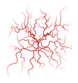 human blood veins red blood vessels design vector image