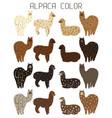 palette of natural colors of alpaca wool animal vector image