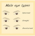 various male eye types vector image vector image