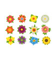 set summer flowers vector image
