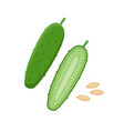 cucumber flat whole and vector image vector image