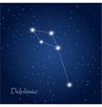 delphinus constellation vector image vector image