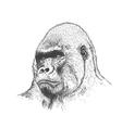 Gorilla portrait vector image vector image