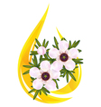 manuka tea tree vector image vector image