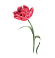 beautiful watercolor floral image with red vector image