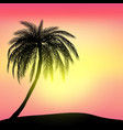 sunset and tropical palm tree with colorful vector image