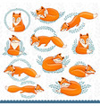 cute cartoon foxes vector image