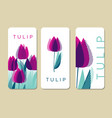 purple tulip flowers on white backdrop vector image vector image