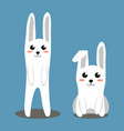 two white rabbit colorful poster vector image