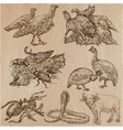 animals around the world - an hand drawn pack vector image vector image