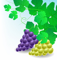 Corner decoration with grapes vector image vector image