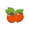 Persimmon Isolated on White vector image vector image