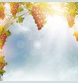 red grape vine frame vector image vector image