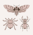 set hand drawn insects different insects vector image vector image