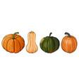 different pumpkins vector image