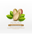 group of pistachio nuts isolated vector image vector image