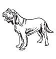 decorative portrait of dog spinone italiano vector image vector image